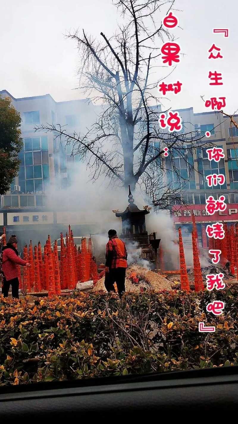 东台人救救这棵百年老树